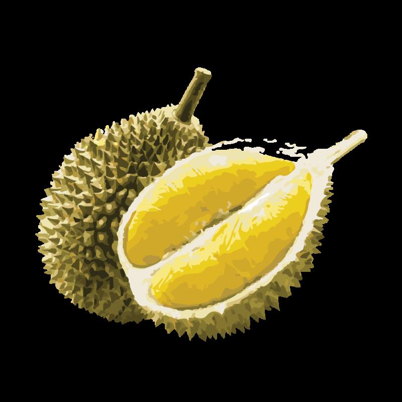 Durian-Vector